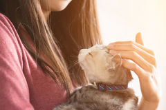 Woman play with her kitten Stock Photo