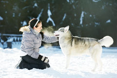 Woman play with siberian husky dog at winter. Happy woman handleer play with siberian husky dog at winter outdoors Stock Photo