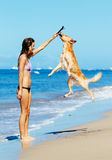 Woman Playiing with Dog Jumping into the Air Stock Photo