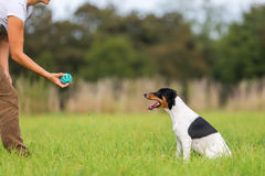 Woman playing ball with a dog Stock Images