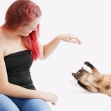 Woman playing with cat Stock Images