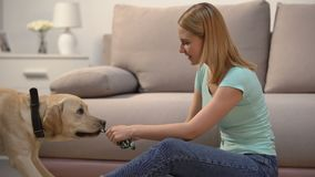 Woman playing with cute labrador dog with pet toy, domestic animal, best friend. Stock footage stock footage