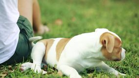 Woman playing with Cute Puppy in Green Grass stock video