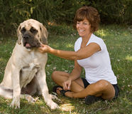 Woman Playing with Dog. Woman affectionately pulling on 6-month-old English Mastiff pups jowl stock image