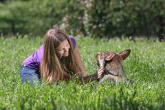 Woman playing with dog in park Stock Photos