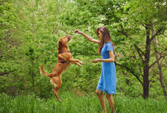 Woman is playing with dog Royalty Free Stock Photography