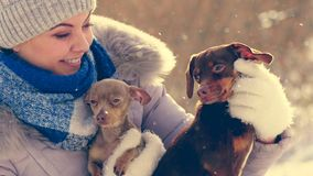 Woman playing with dogs during winter stock photos