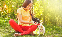 Woman playing with her cat and dog outdoors Stock Photos