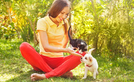 Woman playing with her cat and dog outdoors. Young pretty woman playing with her cat and dog outdoors Stock Image