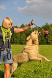Woman playing with her dog Royalty Free Stock Photo