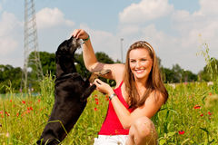Woman playing with her dog in a meadow Stock Photography