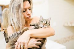 Woman playing with home cat - lovely pet. Blond woman playing with cat. Holding pet on arm royalty free stock images
