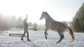 Woman playing with a horse. In the winter which rears up stock footage