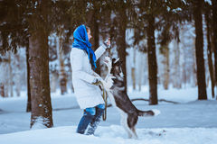 Woman playing with husky Stock Image