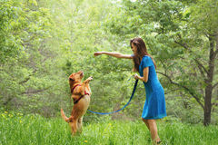 Woman playing with labrador dog in summer Royalty Free Stock Photo
