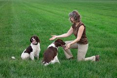 Woman playing with relaxed happy dogs royalty free stock photography