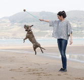 Woman playing and training the dog, outdoor. Royalty Free Stock Photos