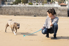 Woman playing and training of your dog. Stock Photo