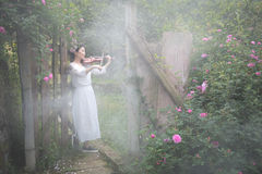 A woman playing the violin. A beautiful woman was playing the violin in the rose garden which was full of fog royalty free stock photos