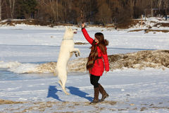Woman playing with white dog in winter Royalty Free Stock Photo