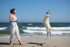 Woman plays with dog. On beach Stock Image