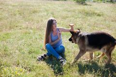 Woman plays with dog sheepdog training nice stock photo