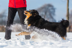 Woman plays with a dog in the snow Stock Photos