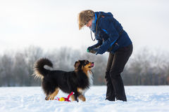 Woman plays with a dog in the snow. Woman plays with an Australian Shepherd dog in the snow Royalty Free Stock Photo