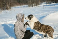 Woman plays with a dog in the winter. Afternoon Royalty Free Stock Image