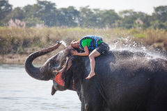 Woman plays with elephant Royalty Free Stock Photos