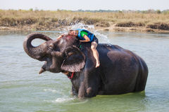 Woman plays with elephant Stock Photography