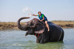Woman plays with elephant Royalty Free Stock Photography