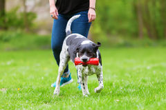 Woman plays with her dog outdoors Stock Photo