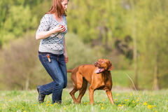 Woman plays with a Rhodesian ridgeback on the meadow stock photography