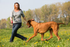 Woman plays with a Rhodesian ridgeback on the meadow. Woman plays with a Rhodesian ridgeback dog on the meadow Stock Photo