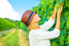 Woman pluck grape Royalty Free Stock Image