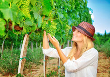 Woman plucks grapes Stock Photos