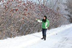 Woman pointing to Ice on Sumac Bush Stock Photo