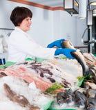 Woman posing near cooled fish Stock Image