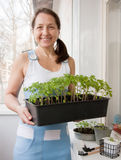 Woman  with pots of seedlings Royalty Free Stock Images