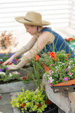 Woman potting plants on a hot spring day Stock Images