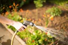 Woman pouring her garden royalty free stock photo