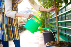 Woman pouring tree in pot with green watering can Royalty Free Stock Image
