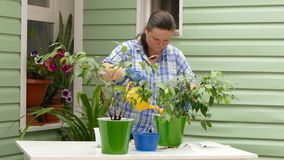 A woman is watering a newly transplanted indoor plant. Woman pours water from the ladle just transplanted indoor plant stock video footage