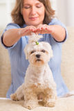 Woman practicing reiki therapy. Woman doing Reiki therapy for a dog, a kind of energy medicine stock photography