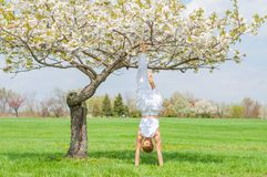 Woman is practicing yoga, doing Salamba Sirsasana exercise, standing in handstand pose near tree royalty free stock image