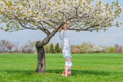 Woman is practicing yoga, doing Salamba Sirsasana exercise, standing in headstand pose near tree royalty free stock photography