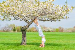 Woman is practicing yoga, doing Salamba Sirsasana exercise, standing in headstand pose near tree royalty free stock photo