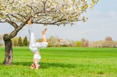 Woman is practicing yoga, doing Salamba Sirsasana exercise, standing in headstand pose near tree royalty free stock image