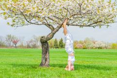 Woman is practicing yoga, doing Salamba Sirsasana exercise, standing in headstand pose near tree royalty free stock images